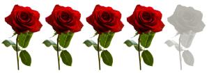 4 rositas